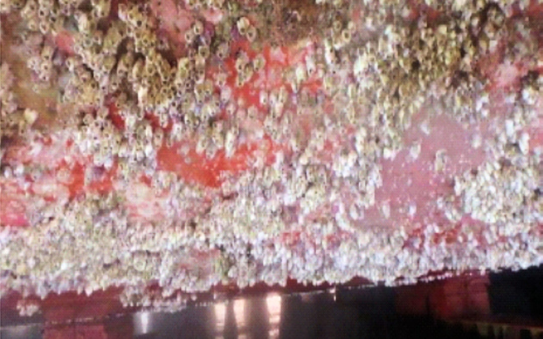 Biofouling under the microscope
